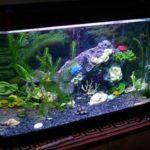 Морской аквариум: как и где разместить