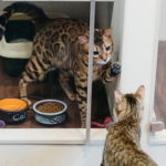 Отель для кошек: предназначение и критерии выбора