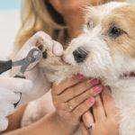 Ветеринарный врач на дом: просто, доступно и очень удобно